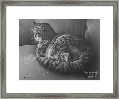 Contentment Framed Print by Pamela Clements