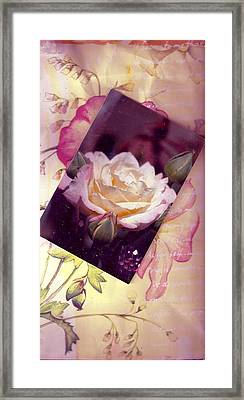 Continuation From Print To Photo Of White Rose Framed Print by Anne-Elizabeth Whiteway
