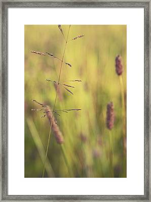 Contrario - Gr02a Framed Print by Variance Collections