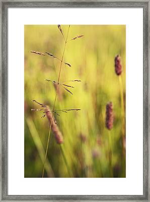 Contrario - Gr02b Framed Print