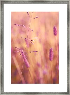Contrario - P01 Framed Print by Variance Collections