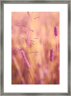 Contrario - P01 Framed Print