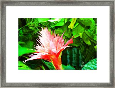 Spiked Pink Delight  Framed Print by Luther Fine Art