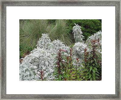 Contrast Of Nature Framed Print by Shawn Hughes