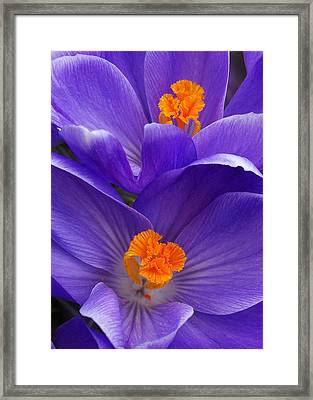 Contrasting Colors Framed Print by Kathi Mirto