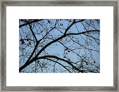 Contrasting Forms In Nature Framed Print by Stacie  Goodloe