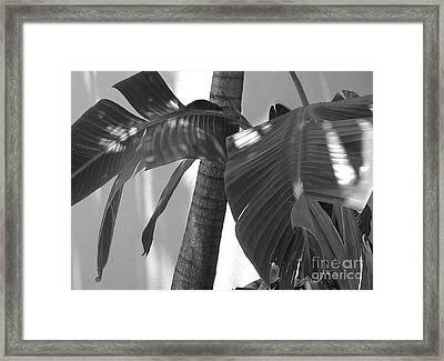 Contrasting Palms Framed Print by Margaret Juul Ammann