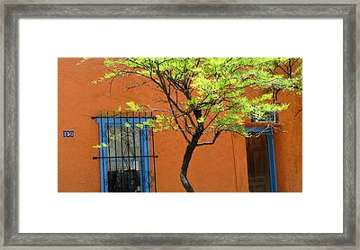 Framed Print featuring the photograph Contrasts by Brenda Pressnall