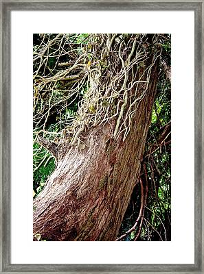 Controlling English Ivy Framed Print