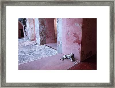 Convent Dog Framed Print