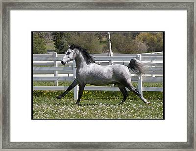 Conversano Catalina IIi Framed Print by Wes and Dotty Weber