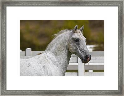 Conversano Mima Framed Print by Wes and Dotty Weber
