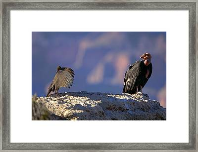 Conversation Framed Print by Kiril Kirkov