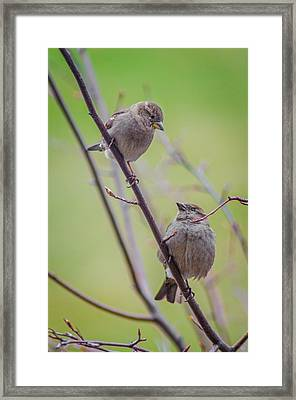 Framed Print featuring the photograph Conversation Of The Day by Steven Santamour