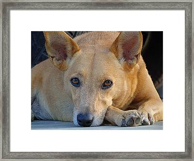 Cookie Chillin'  Framed Print