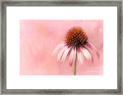 Cool And Pink Framed Print
