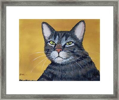 Cool Cat Framed Print by Anastasiya Malakhova