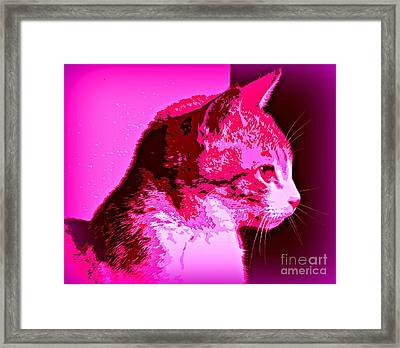 Framed Print featuring the photograph Cool Cat by Clare Bevan