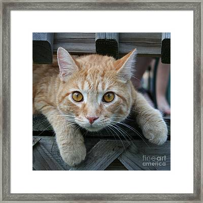 Cool Cat Named Calvin Framed Print