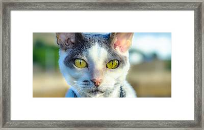 Cool Cat Framed Print by Tylie Duff