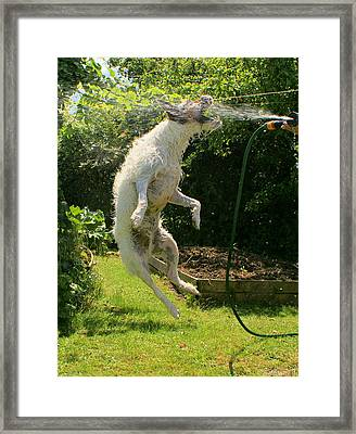 Framed Print featuring the digital art Cool Dog by Ron Harpham