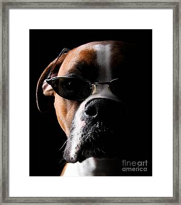 Cool Dog Framed Print by Jt PhotoDesign