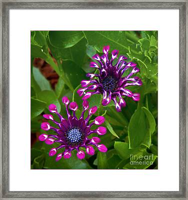 Cool Flowers Framed Print by Timothy J Berndt