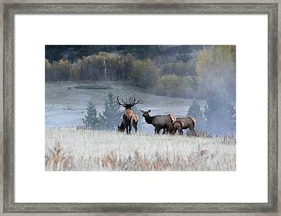 Cool Misty Morning Framed Print