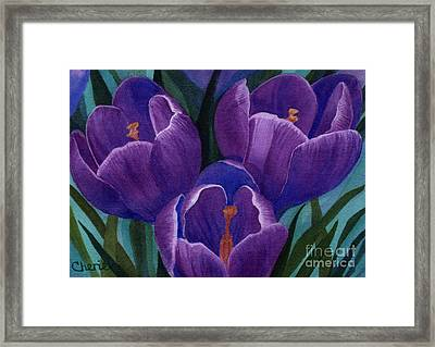 Cool Purple Crocus Framed Print by Vikki Wicks
