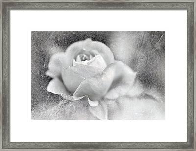 Cool Rose Framed Print