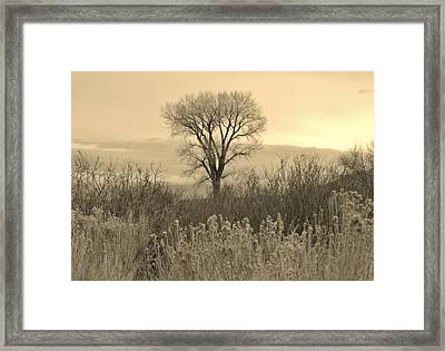 Framed Print featuring the photograph Cool Shadows by Marilyn Diaz