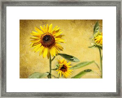 Cool Sunflowers Framed Print by Sabrina L Ryan