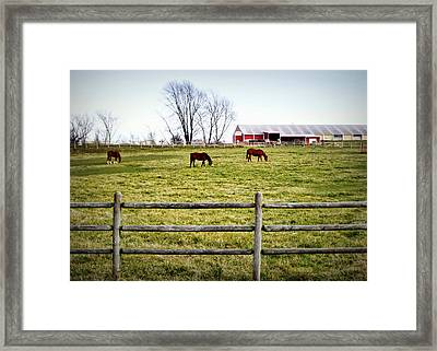 Cool Weather Graze Framed Print by Cricket Hackmann