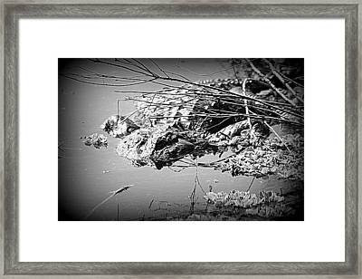 Cooling Off  B W Framed Print by Sheri McLeroy
