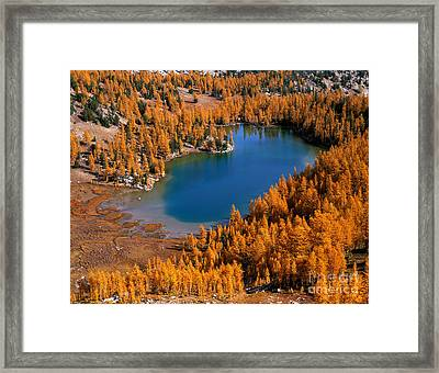 Cooney Lake Surrounded By Larch Trees Framed Print by Tracy Knauer