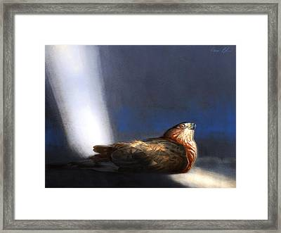 Coopers Hawk Framed Print by Aaron Blaise