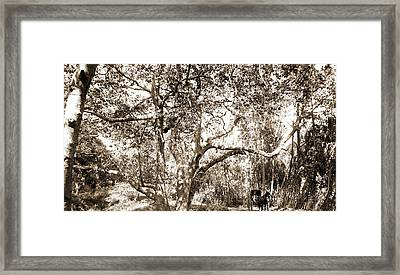 Coopers Sic Canyon, Jackson, William Henry, 1843-1942 Framed Print by Litz Collection