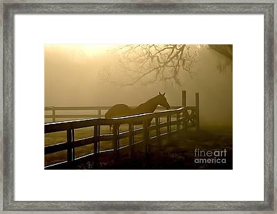 Coosaw Early Morning Mist Framed Print