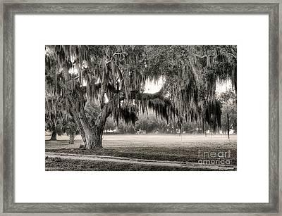 Coosaw - Split Oak Framed Print