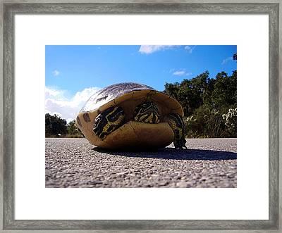 Cooter Turtle Framed Print by Chris Mercer