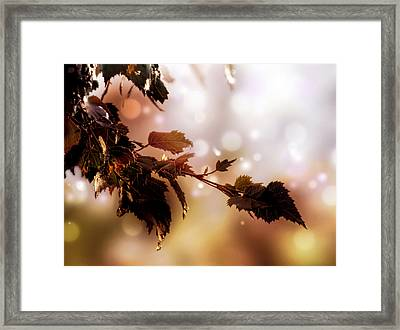 Framed Print featuring the photograph Copper Birch by Valerie Anne Kelly