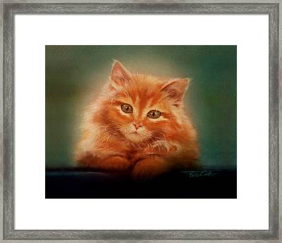 Copper-colored Kitty Framed Print by Evie Cook