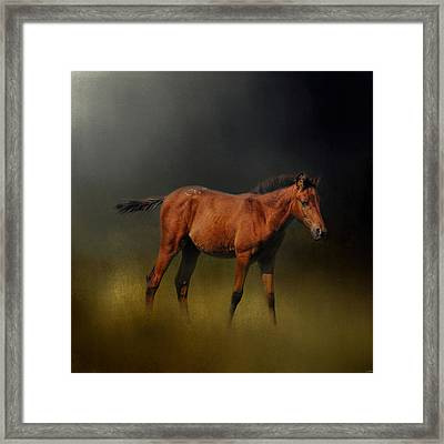 Copper Colt In The Moonlight Framed Print by Jai Johnson