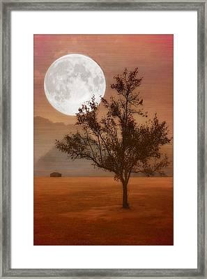 Copper Tree Framed Print by Tom York Images