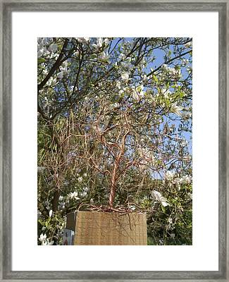 Copper Willow Framed Print by Kim Bleeker