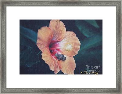 Coqui  Framed Print by The Art of Alice Terrill