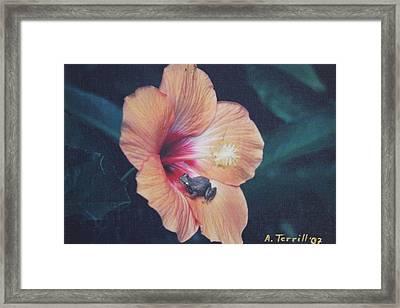 Coqui  Framed Print