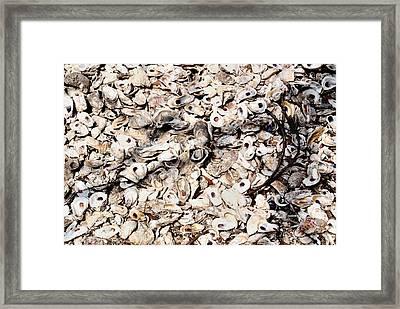 Coquina Framed Print