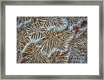 Coral 1 Framed Print by Walt Foegelle
