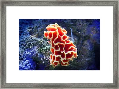 Coral Artistry Framed Print